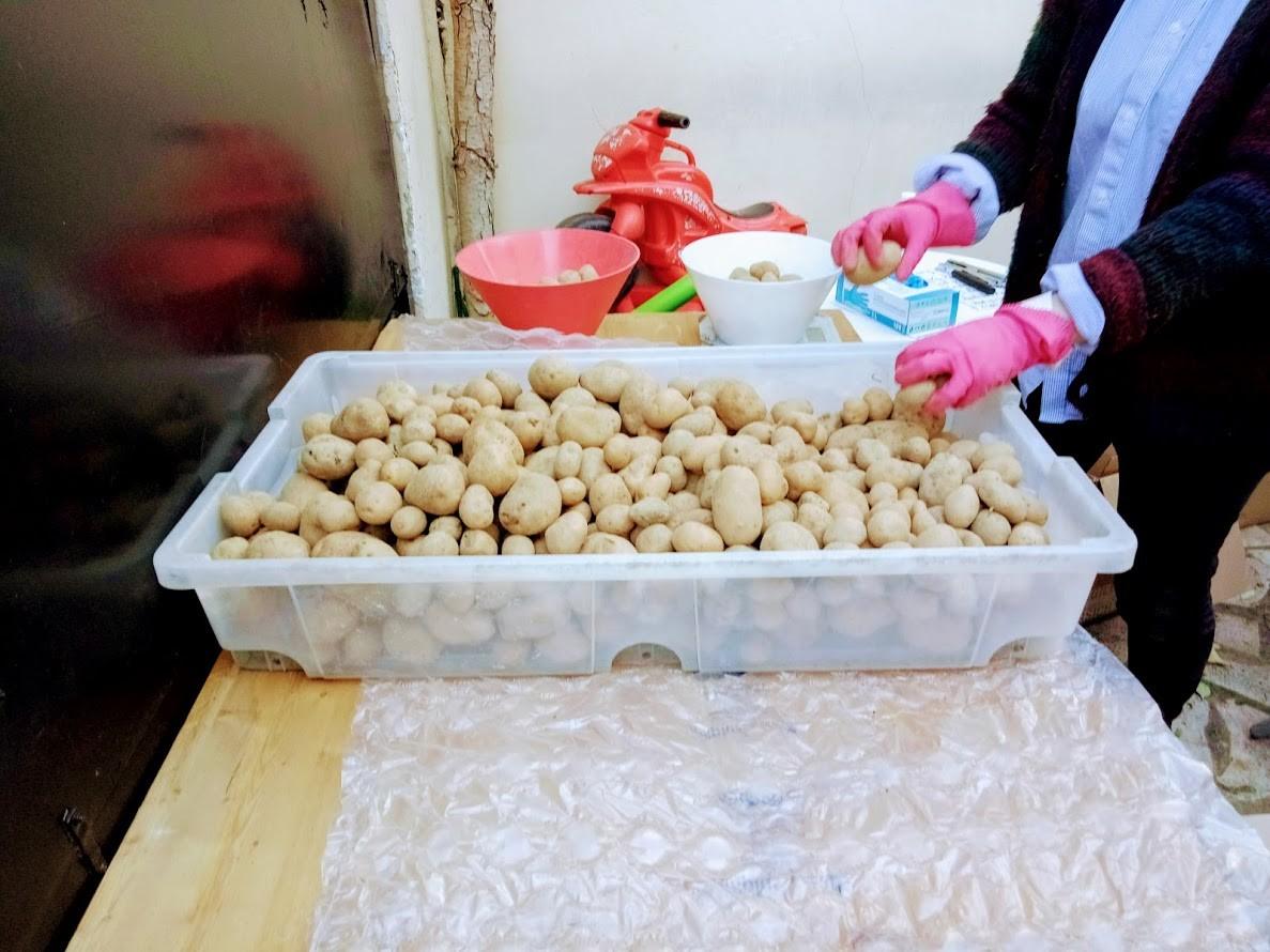 Pommes de Terres à peser